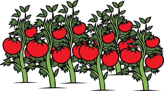 Mengatasi jerawat dengan tomat
