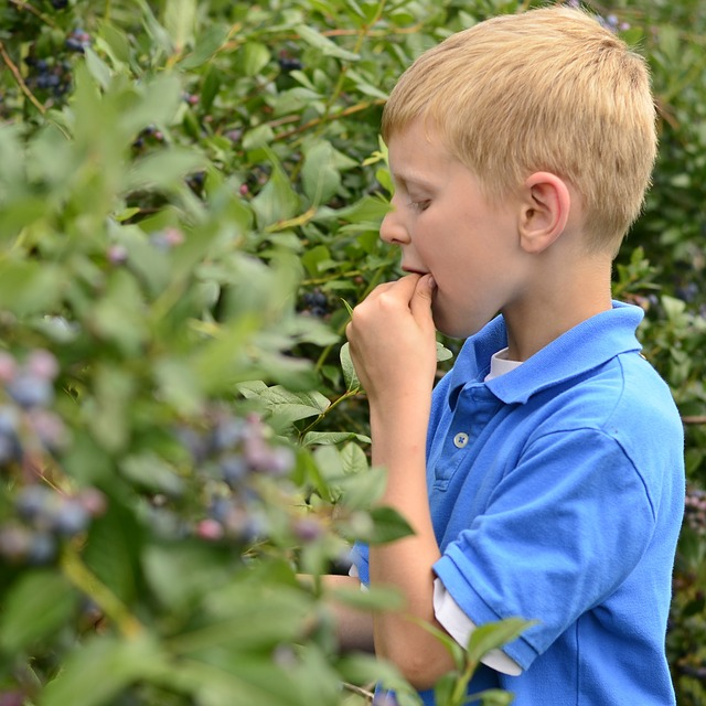Makanan untuk menambah kecerdasan anak