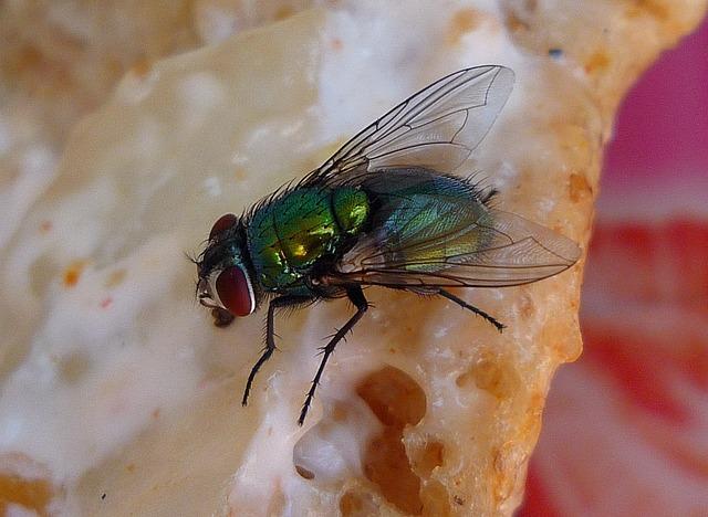 Racun dalam Rumah Tangga - Insektisida