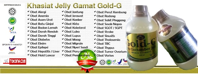 Khasiat jelly gamat gold-g sea cucumber